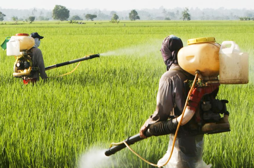 how to produce Insecticides